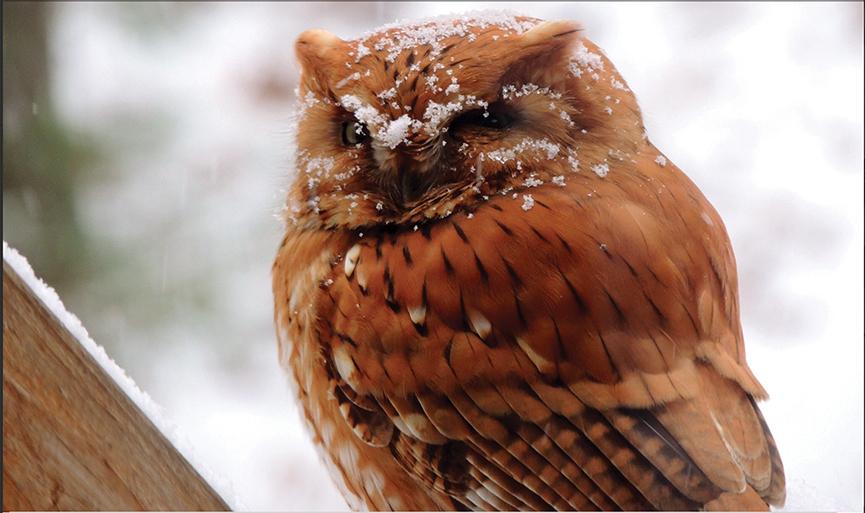 Winter_Bird_highlands_cashiers_nc__David_Berger