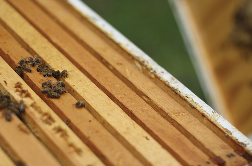 bee_colony_colapse_disorder_four