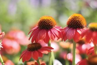 chattooga-gardens-cashiers-nc-flower