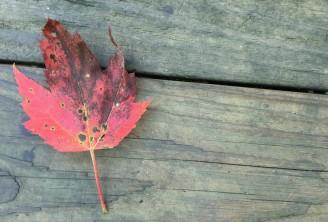 leaf-wood-background