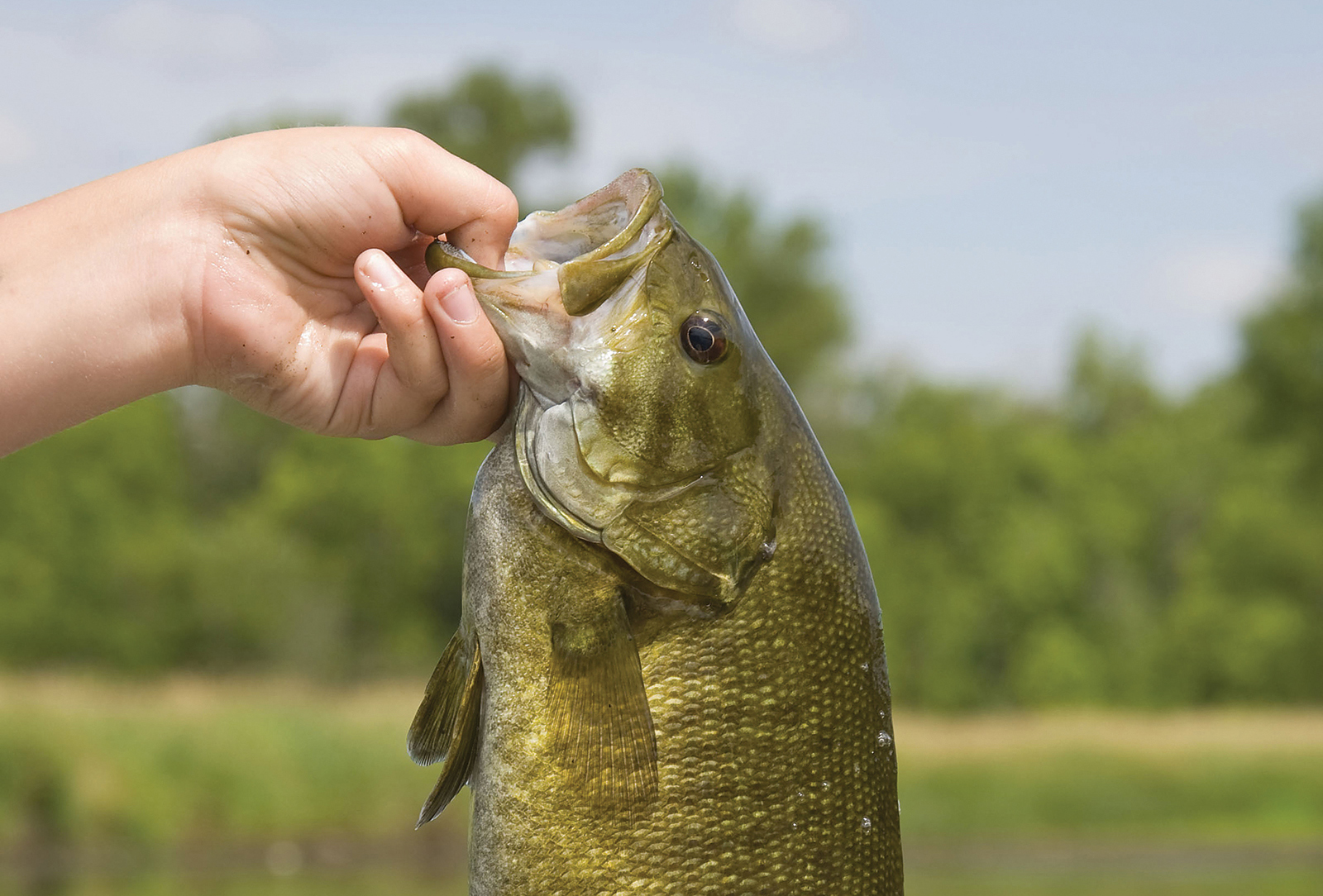 small-mouth-bass