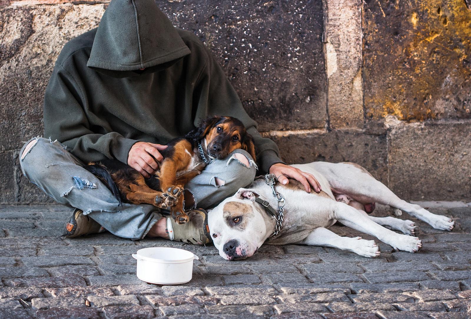 cashiers-highlands-humane-society