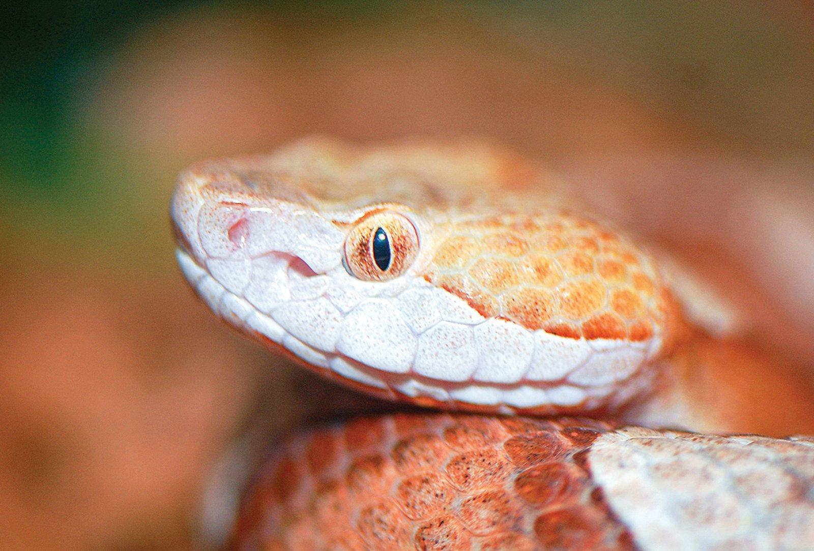 highlands cashiers land trust snake