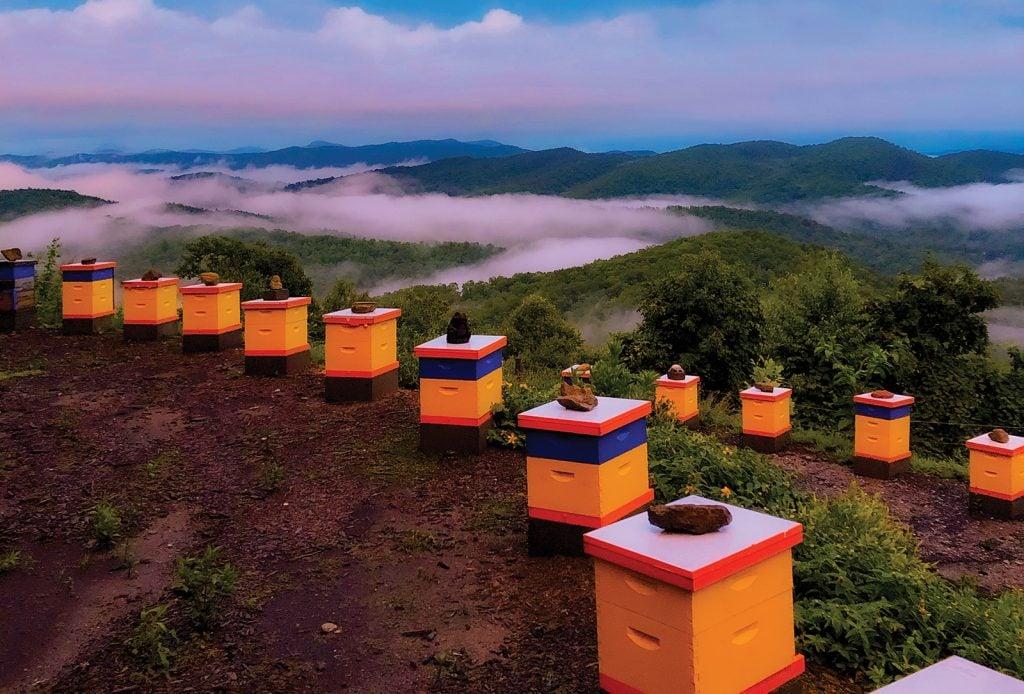 cashiers nc killer bees sunset