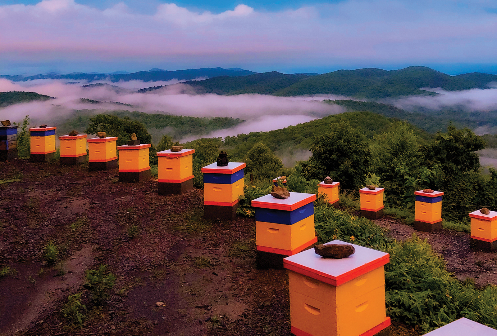 cashiers nc killer bees sunset