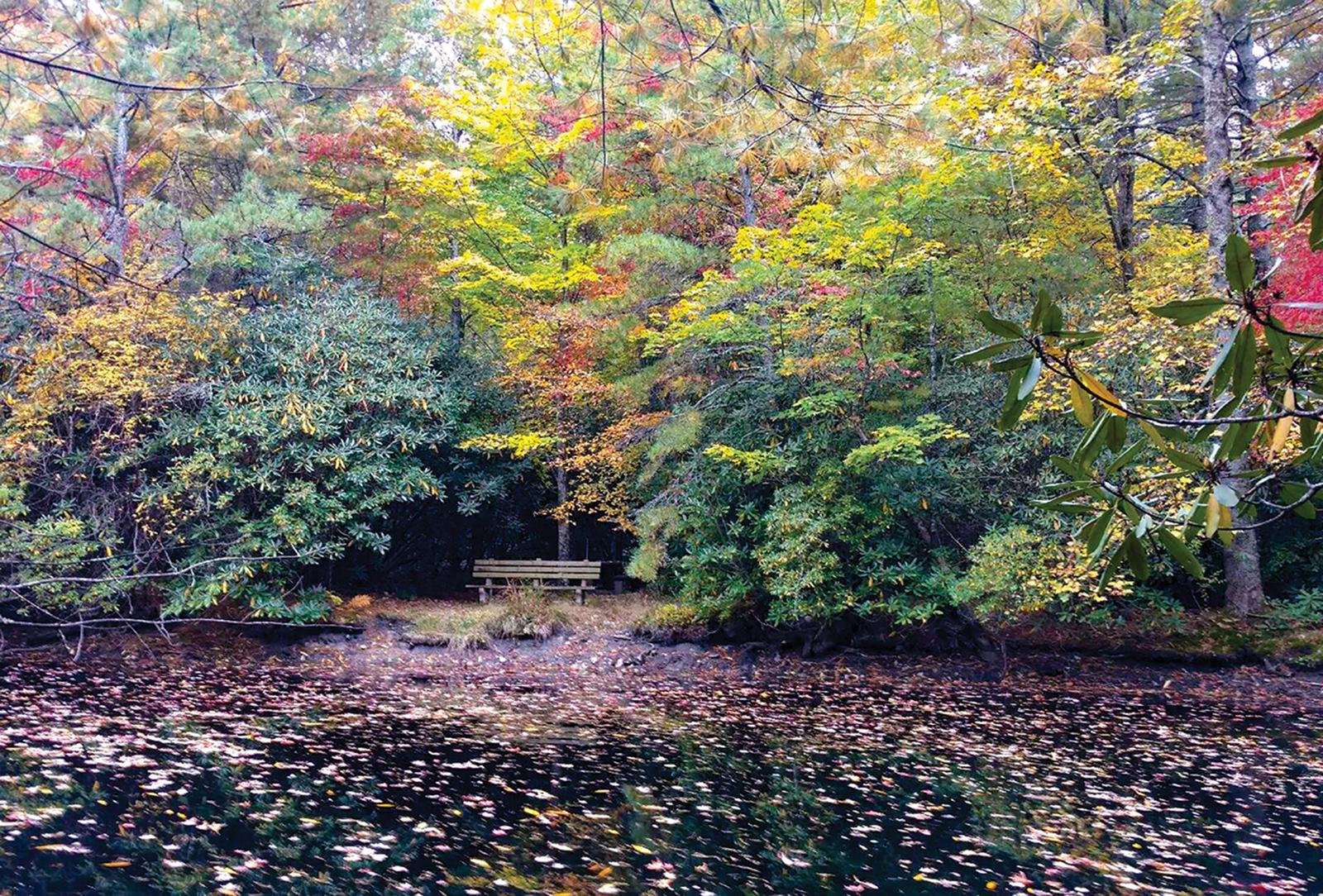 highlands cashiers land trust Bench at Dixon Pond