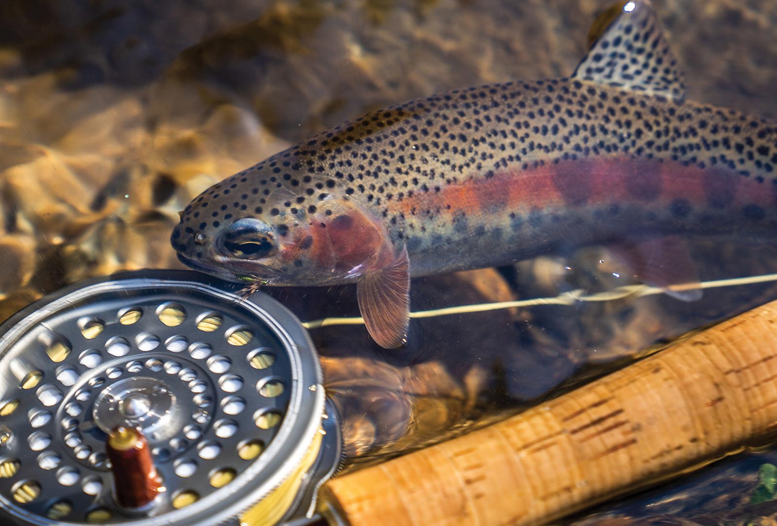 highlands nc cashiers nc fishing classic bow