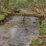 highlands-cashiers-land-trust-brushy-face