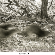 ! Otters are back to splashing on the Plateau!