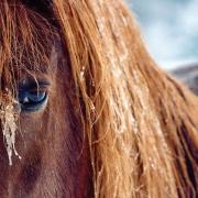 highlands-photographer-cynthia-strain-horse-winter