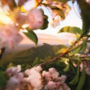 Linville Gorge Sunrise Full