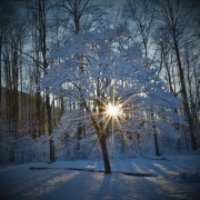 winter-photo-contest-entry-trees-lights