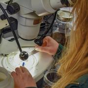Highlands-nc-Biological-station-micorscope