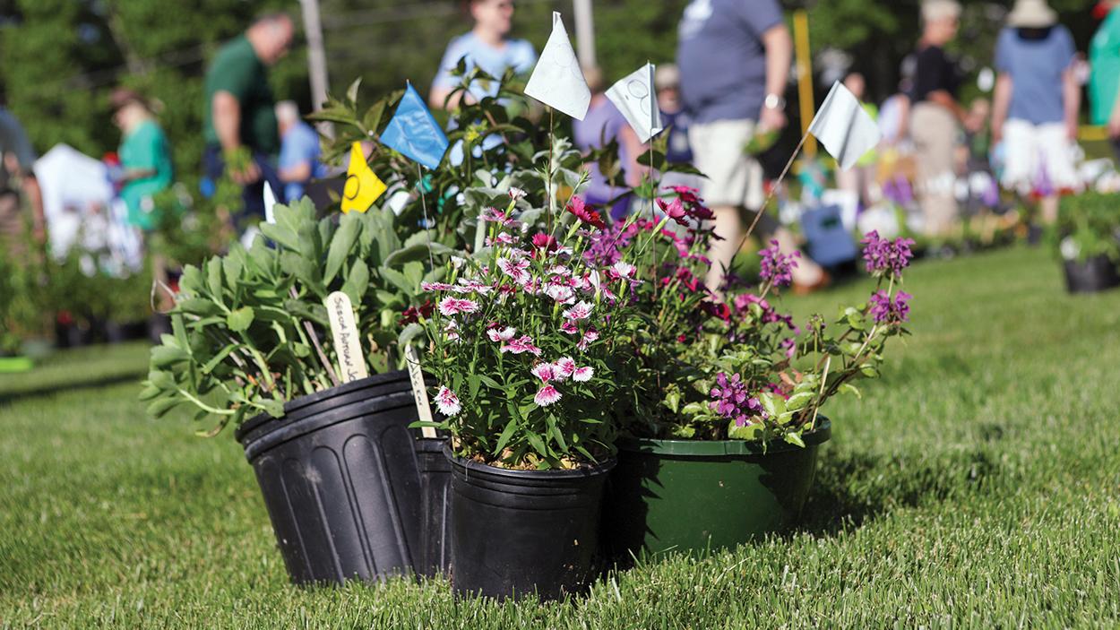 highlands-nc-mountain-garden-club-plant-sale-plants