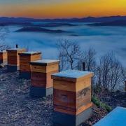 lake-toxaway-killer-bees-honey-view