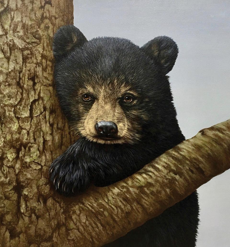 david-berger-cashiers-nc-artist-bear-august-cover
