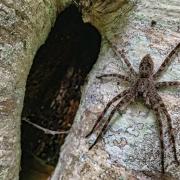 highlands-cashiers-land-trust-spider