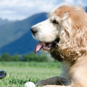 Playing Golf with Your Dog.
