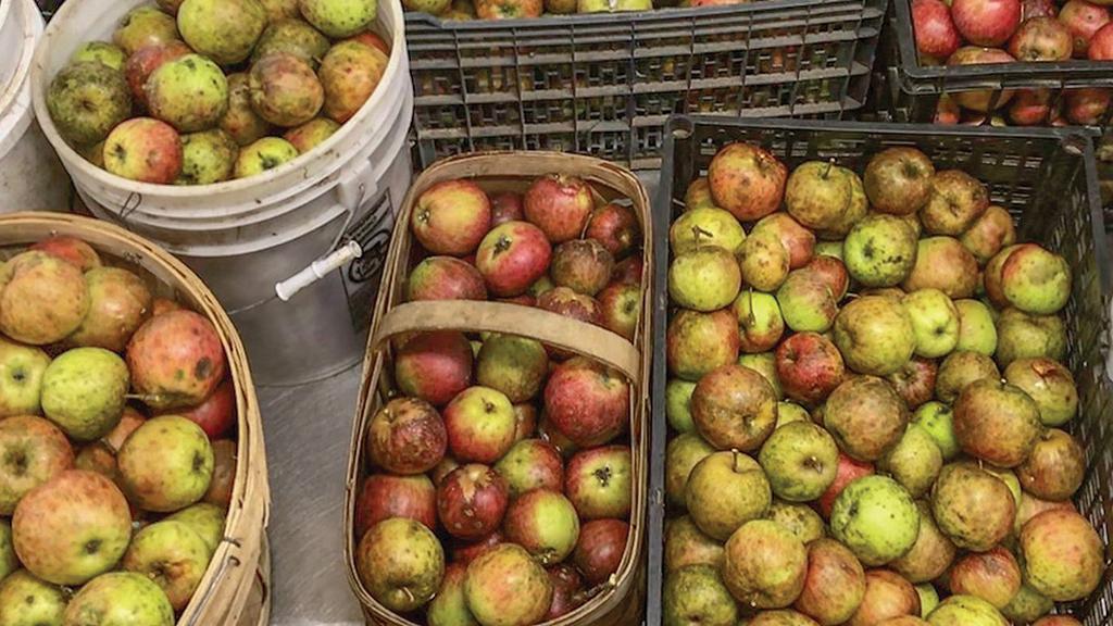 highlands-nc-many-hands-peace-farm-apples