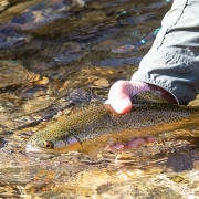 highlands-nc-three-river-fly-fishing