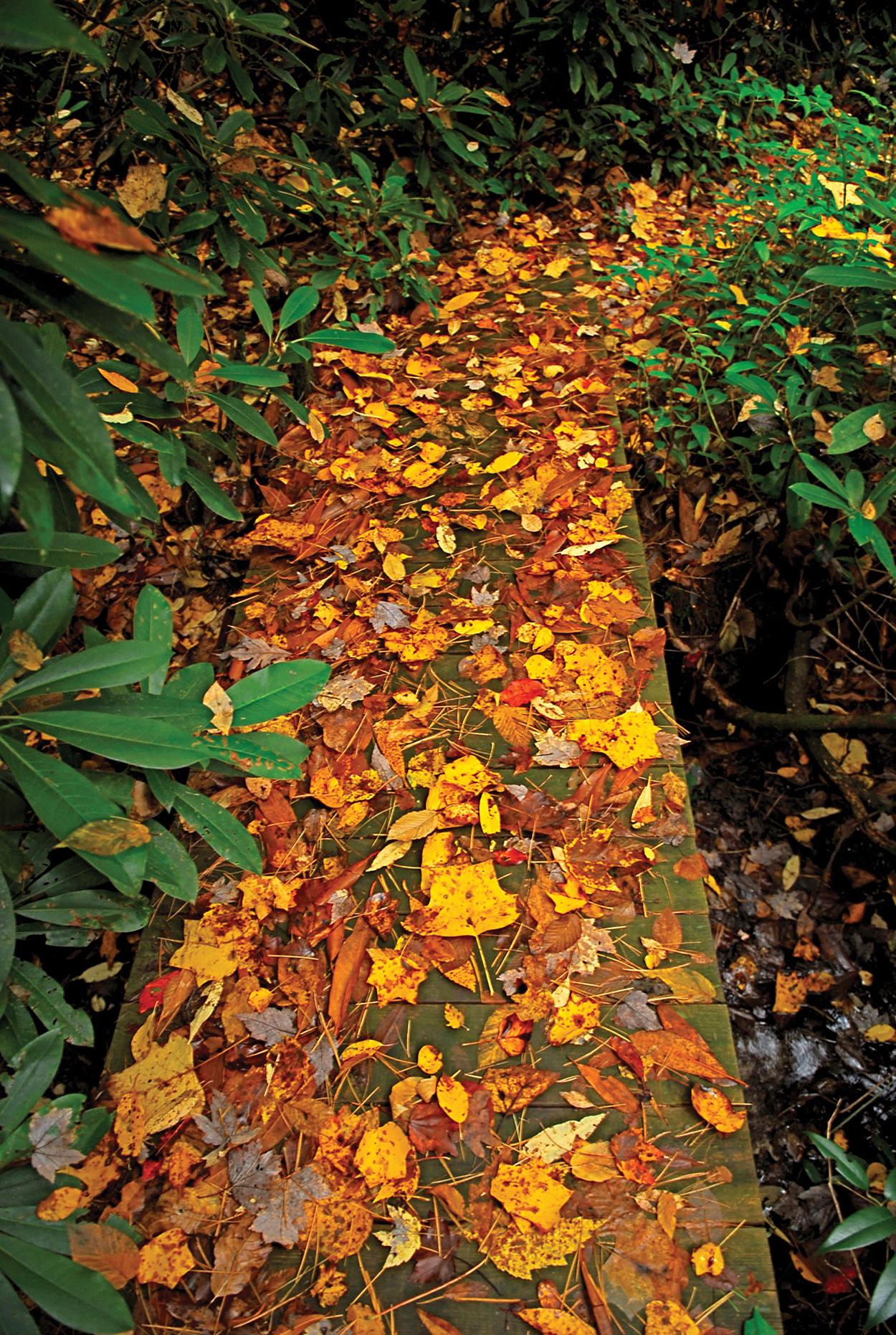 Highlands-Biological-Foundation-October-LEAVES