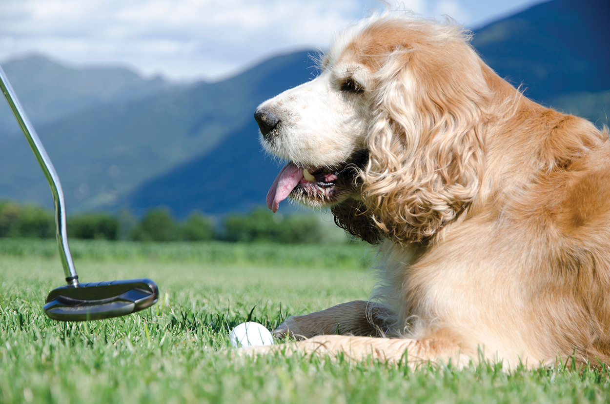 Putts for Paws, Cashiers Highlands Humane Society