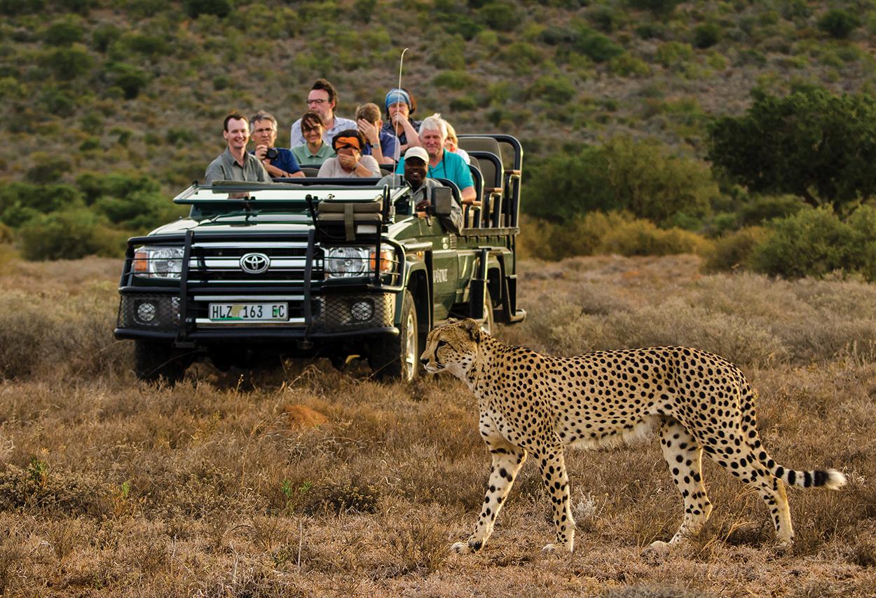cashiers-nc-africa-awaits-safari