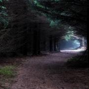 Narrow Path Through Foogy Mysterious Forest