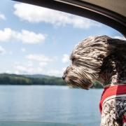lake-glenville-nc-doggie